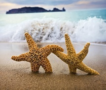 starfish_on_beach